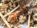 На Таманском полуострове нашли уникальное насекомое