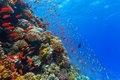 Мировой океан умирает