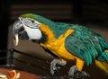 Любят музыку и говорят: все о попугаях