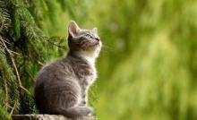 """Зоологи раскрыли секрет """"независимости"""" домашних кошек"""