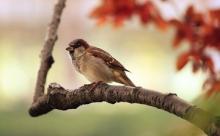 Учёные научились определять пол птиц с помощью штангенциркуля