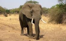 В Индии спасли слона, упавшего в 20-метровый колодец