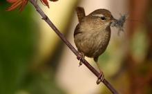Эти пять птиц могут научить вас языку птиц