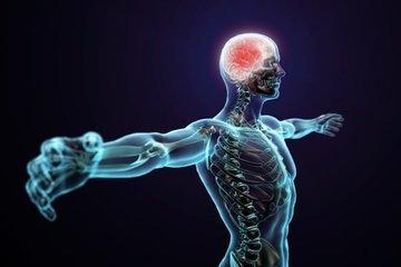 Какие открытия о человеческом организме были сделаны в 2018