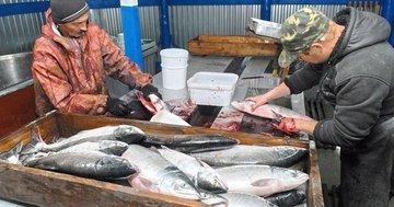 В Магадане появится новый рыбоперерабатывающий комплекс