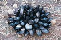 Эпоха пластика: вместе с морепродуктами мы употребляем пластик