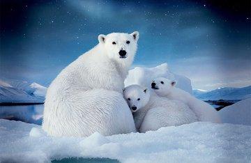 Ледники в Арктике грозят гибелью ее обитателям