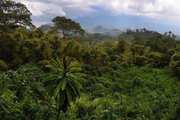 Какую роль играют тропические леса и чем грозит планете обезлесение?