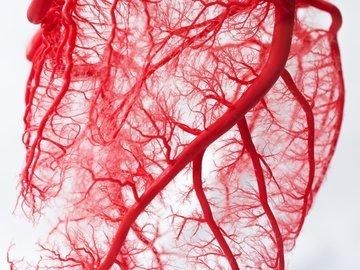 В России кровеносную систему будут оценивать по-новому