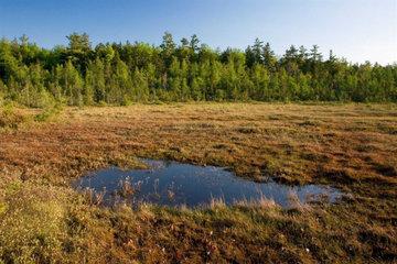 Зачем нам нужны болота и почему нельзя их осушать