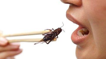 Как мир переходит на употребление насекомых в пищу