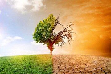 Как раннее цветение способствует глобальному потеплению?