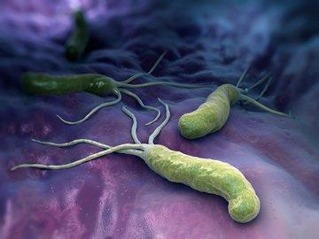 """Известная бактерия """"виновата"""" в развитии рака"""