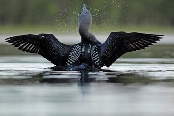 Жители Карелии спасли раненую птицу