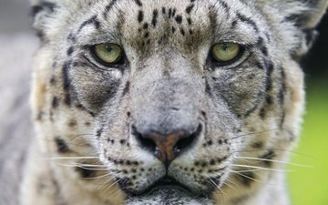11 поразительных фактов об исчезающей дикой природе Земли