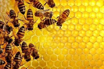 Почему пчелы вымирают?