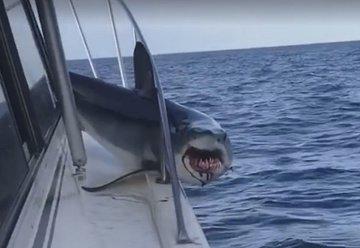 Акула запрыгнула на палубу рыбацкого судна