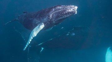 Горбатый кит чуть не погубил туристов-рыбаков