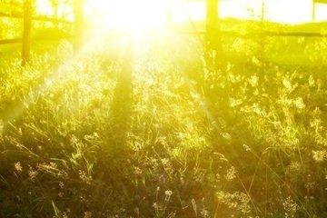 Солнечный свет может помочь уничтожить пылевые бактерии