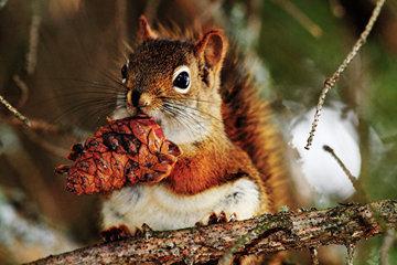 Удивительные способы животных делать запасы на зиму. Белки