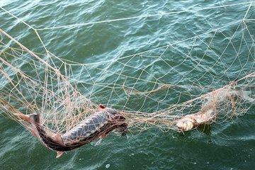 В Новосибирске увеличили штрафы за браконьерство