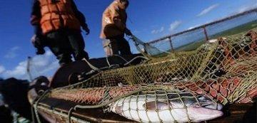 Власти Ростовской области увеличат инвестиции в рыбную отрасль в два раза