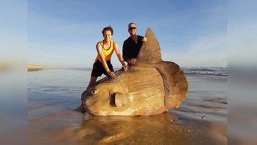 Странная рыба была обнаружена рыбаками в Австралии