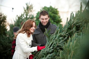 Роскачество: как выбрать новогоднюю елку