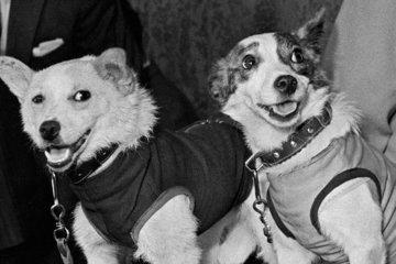 Животные в космосе - российский опыт