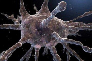 Исследователи превратили клетки кожи в иммунные