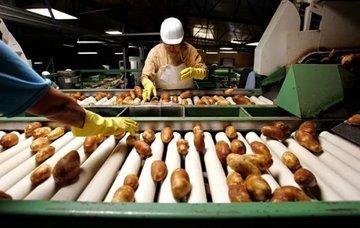 Завод по переработке картофеля откроют в 2019 году в Тюменской области