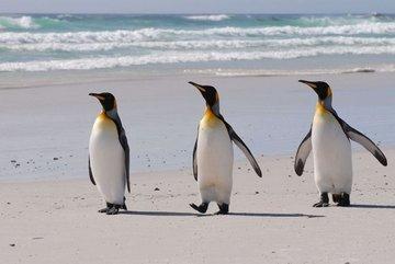 Остров с пингвинами выставлен на продажу