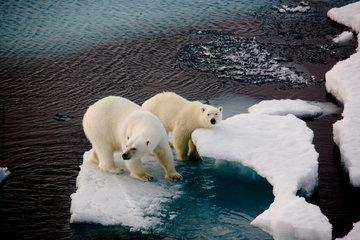 Арктика под угрозой: в 2040 году она может растаять