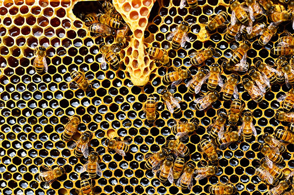 Europe needs to take urgent measures to save its bees before it's too late. 61559.jpeg