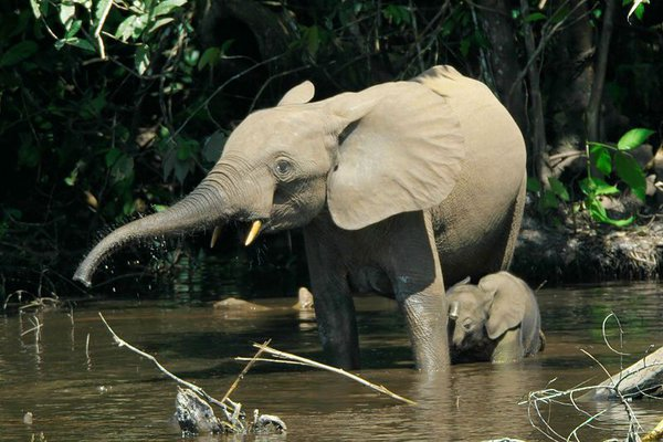 Japan: Ban ivory trade or we boycott Olympics. 63655.jpeg
