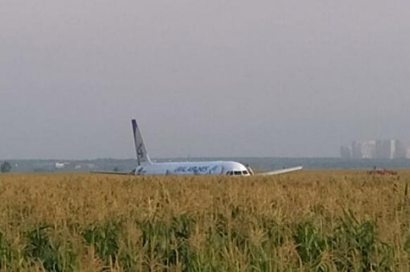 Birds crash into Airbus A-321 during takeoff in Moscow. 63762.jpeg