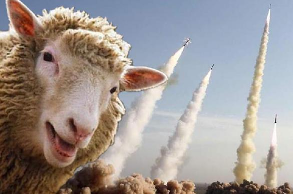 Sheep disrupt the work of US missile defences in Romania. 61824.jpeg