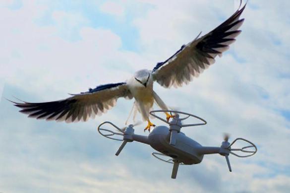 Kremlin birds of prey capable of downing drones. 61889.jpeg