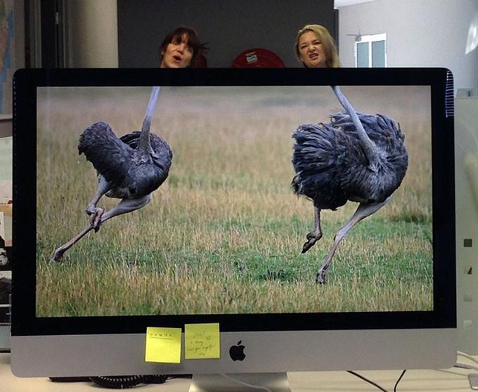 Hilarious desktop safari