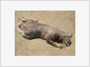 Cryptozoology slowly disappears with Montauk Monster