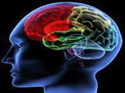 Human brain measures time by observing movements