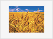 Russia may prevent global food crisis