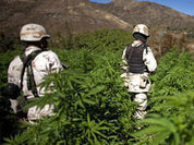 Mexico still looking for its own self on fields of cannabis