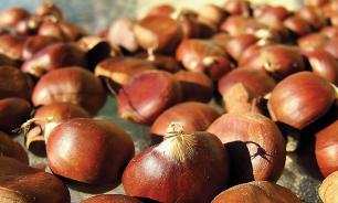 Saint Martin of Tours, the Indian Summer, Chestnuts: The explanation