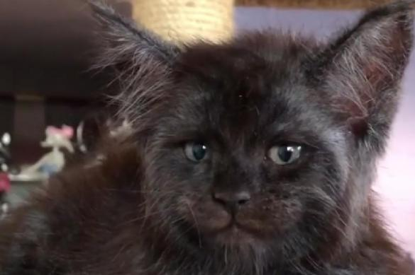 Cats with human faces born in Moscow