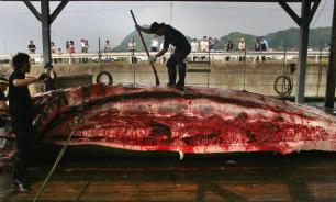 No Way, Norway! Norway's annual slaughter of whales