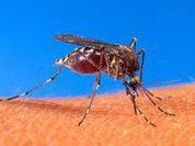 Chikungunya: New disease hits the Americas
