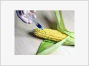 GMOs start Golden Age era for modern-day biology