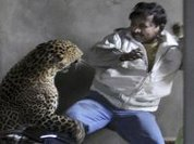 India: Man scalped by leopard
