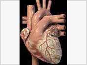 Scientists invent ointment to treat heart attacks